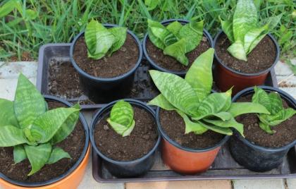 Gardenterapia